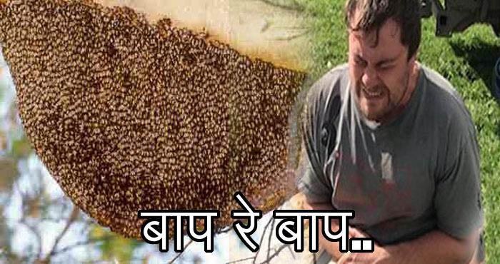 पैसो के लिए जा बैठा यह शख्स मधुमक्खी के छत्ते में, फिर जो हुआ देख कर कहेंगे आप बाप रे बाप.....