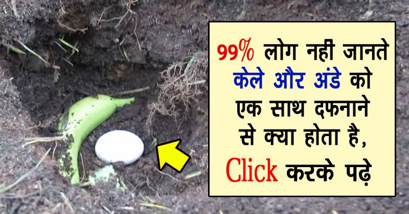 99% लोग केले और अंडे के इस रिश्ते को नहीं जानते होंगे, क्लिक करके पढें पूरी ख़बर!