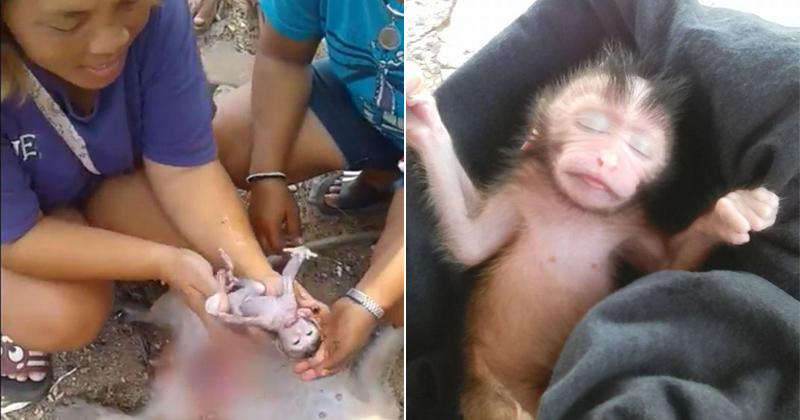 पहले बंदर के बच्चे को लिया गोद, अब राज़ से उठा पर्दा तो दुनिया दंग रह गई!