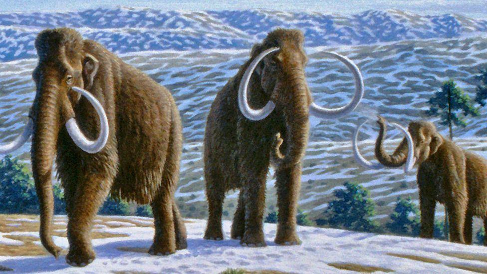 memath elephant